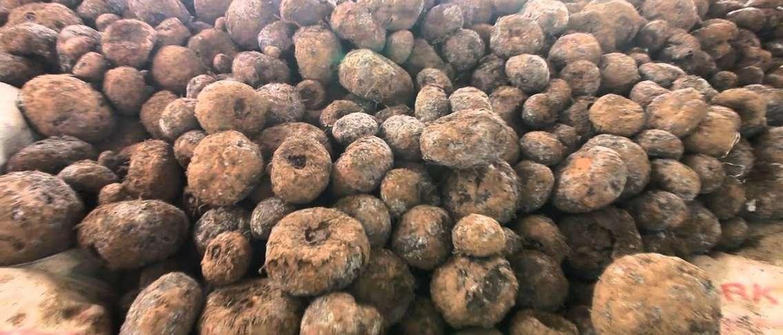 16 Manfaat Ginseng Jawa Untuk Kesehatan Tubuh - Manfaat.co.id